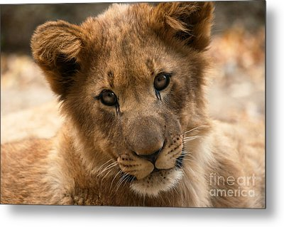 Metal Print featuring the photograph Am I Cute? by Christine Sponchia