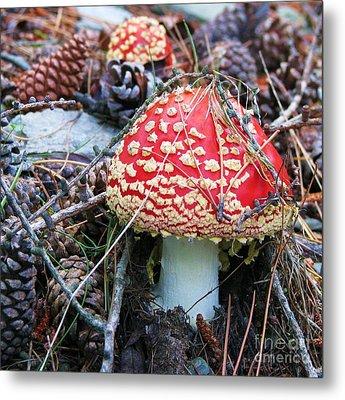 Amanita Mushroom Metal Print