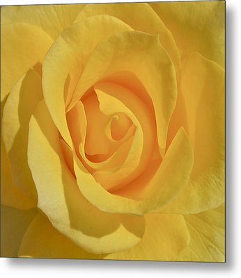 Amarillo Metal Print by Gwyn Newcombe