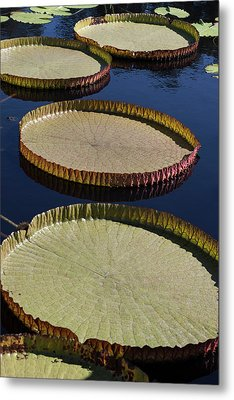 Amazonas Lily Pads II Metal Print by Suzanne Gaff