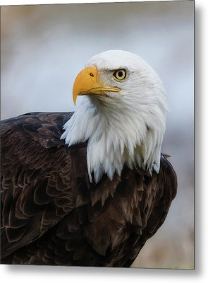 Metal Print featuring the photograph American Bald Eagle Portrait by Angie Vogel