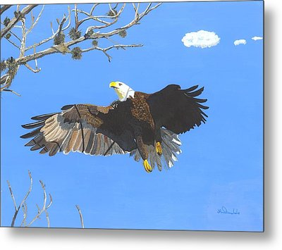 American Bald Eagle Metal Print by William Demboski