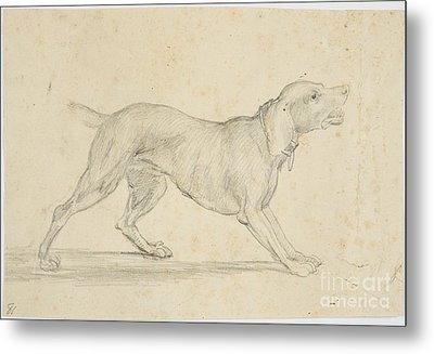 American Barking Dog In Profile Metal Print by MotionAge Designs