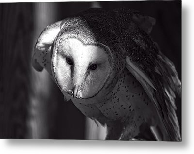 American Barn Owl Monochrome Metal Print by Chris Flees