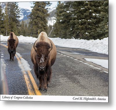 American Bison In Yellowstone National Park Metal Print by Carol M Highsmith