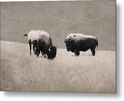 American Bison Metal Print by Ron Jones