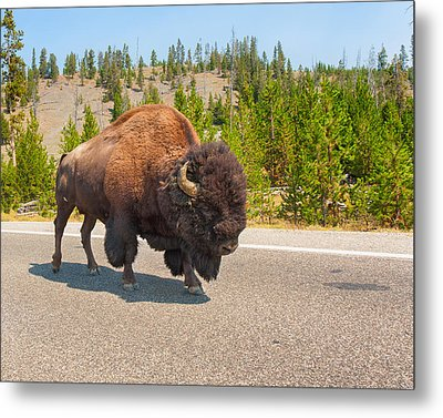 Metal Print featuring the photograph American Bison Sharing The Road In Yellowstone by John M Bailey