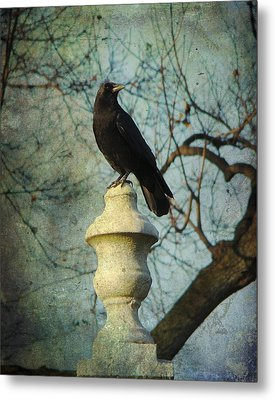 American Crow Metal Print by Gothicrow Images