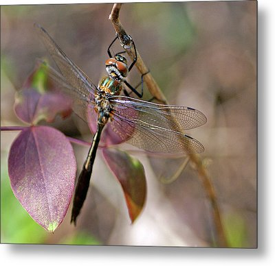 American Emerald Metal Print by Bill Morgenstern