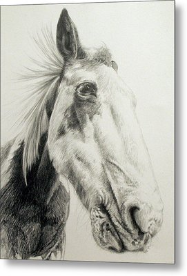 American Paint Horse Metal Print by Keran Sunaski Gilmore