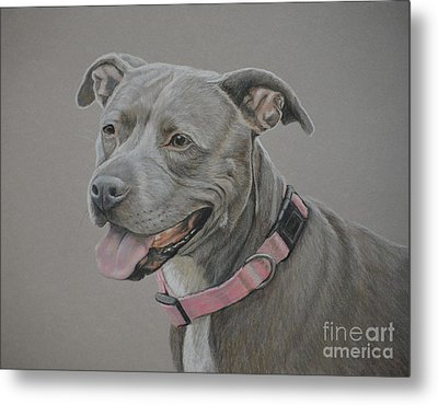 American Staffordshire Terrier Metal Print by Charlotte Yealey
