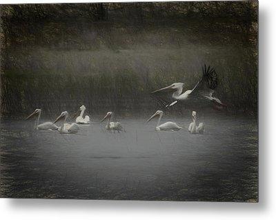 American White Pelicans Da Metal Print by Ernie Echols
