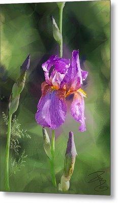 Amethyst Iris 2 Metal Print