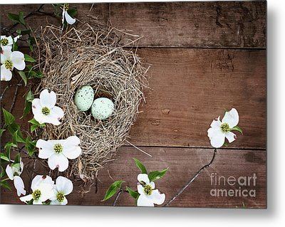Metal Print featuring the photograph Amid The Dogwood Blossoms by Stephanie Frey