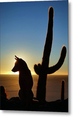 Metal Print featuring the photograph Amigo by Skip Hunt