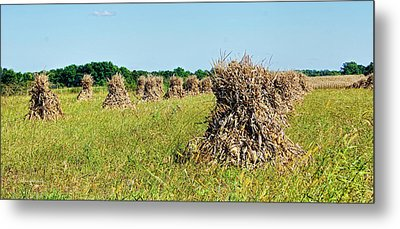 Metal Print featuring the photograph Amish Harvest by Cricket Hackmann