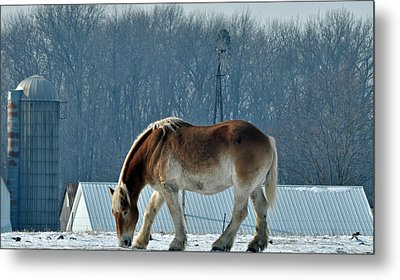 Amish Horse Metal Print by Maria Suhr
