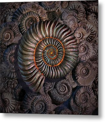 Ammonite 1 Metal Print