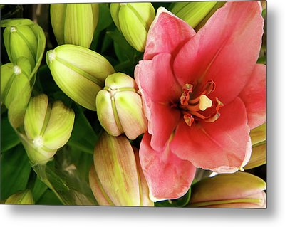 Metal Print featuring the photograph Amsterdam Buds by KG Thienemann
