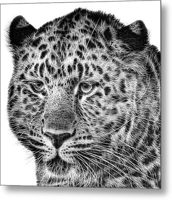 Amur Leopard Metal Print by John Edwards