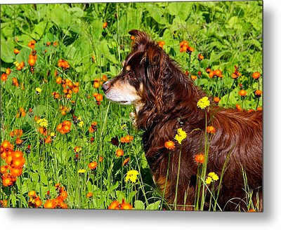 An Aussie's Thoughtful Moment Metal Print by Debbie Oppermann