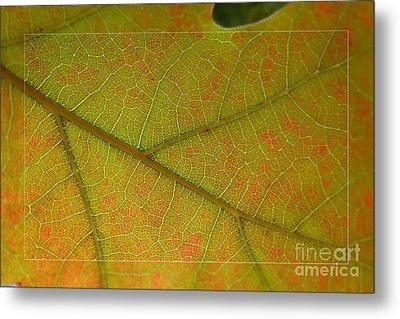 Metal Print featuring the photograph An Autumn Leaf by Jean Bernard Roussilhe
