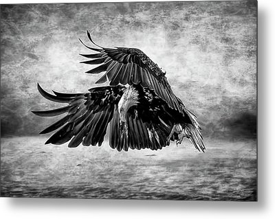 An Eagles Quest Metal Print by Wes and Dotty Weber
