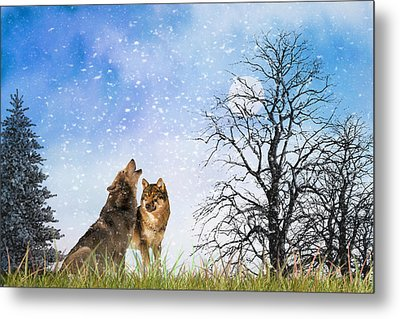 An Early Winter Howl Metal Print by Diane Schuster