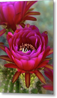 Metal Print featuring the photograph An Inner Beauty by Saija Lehtonen