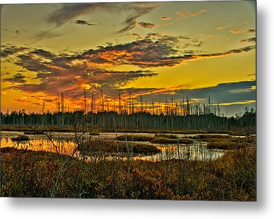 An November Sunset In The Pines Metal Print