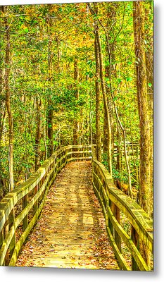 An Old Growth Bottomland Hardwood Forest Metal Print by Don Mercer