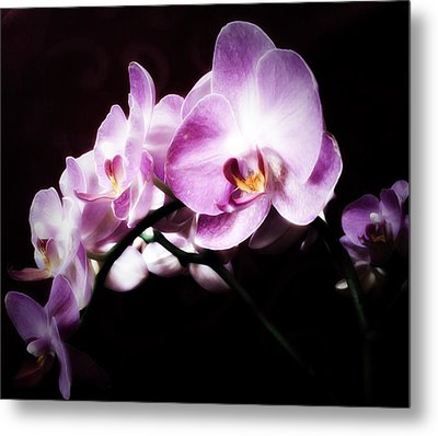 An Orchid For You Metal Print by Gabriella Weninger - David