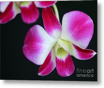 An Orchid Metal Print by Sabrina L Ryan
