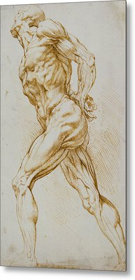 Anatomical Study Metal Print by Rubens