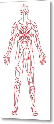 Anatomy Of Human Body And Spider Web Metal Print