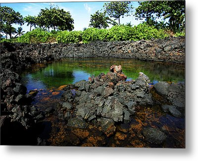 Metal Print featuring the photograph Anchialine Pond by Anthony Jones