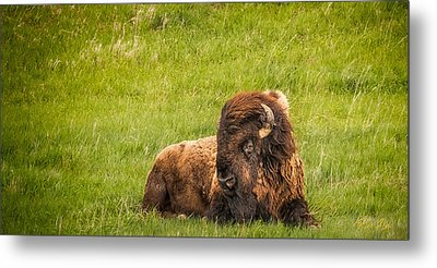 Metal Print featuring the photograph Ancient Bison by Rikk Flohr