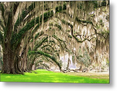 Ancient Southern Oaks Metal Print