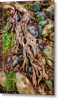Ancient Sycamore Roots Metal Print
