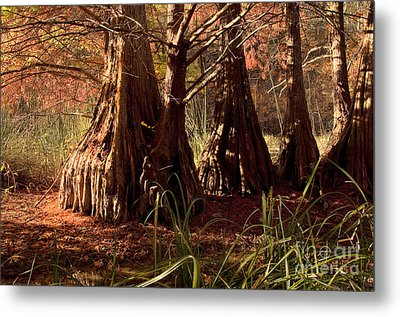 Metal Print featuring the photograph Ancient Tree At Lake Murray by Tamyra Ayles