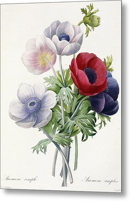 Anemone Simple Metal Print by Pierre Joseph Redoute