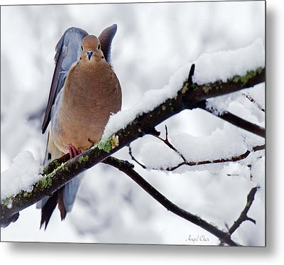 Metal Print featuring the photograph Angel Mourning Dove by Angel Cher