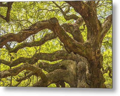 Metal Print featuring the photograph Angel Oak I by Steven Ainsworth