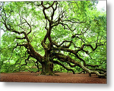 Angel Oak Tree Metal Print by Jean Haynes