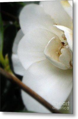 Angelic Camellia Metal Print by Mg Blackstock