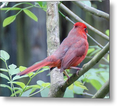 Angry Bird Metal Print by Julie Cameron
