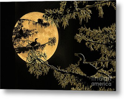 Metal Print featuring the photograph Anhingas In Full Moon by Bonnie Barry