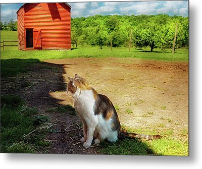 Animal - Cat - The Mouser Metal Print by Mike Savad