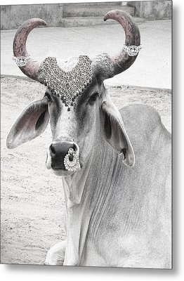 Animal Royalty 6 Metal Print by Sumit Mehndiratta