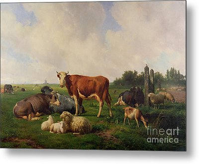 Animals Grazing In A Meadow  Metal Print